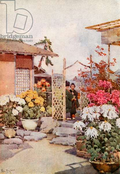 Chrysanthemums, Kyoto (colour litho)