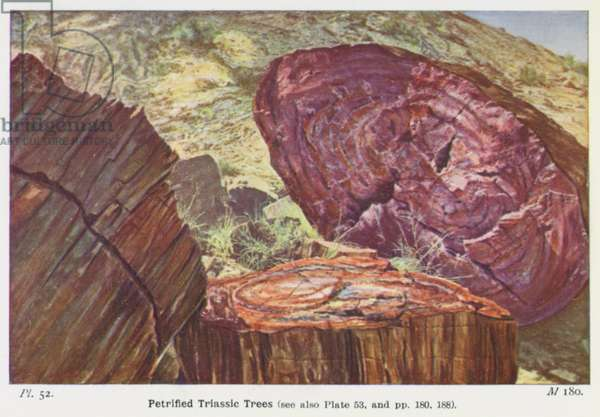 Petrified Triassic Trees (photo)
