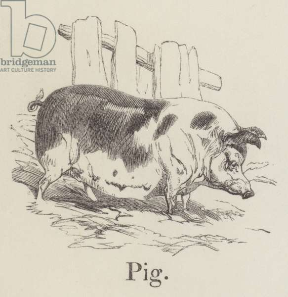 Pig (engraving)