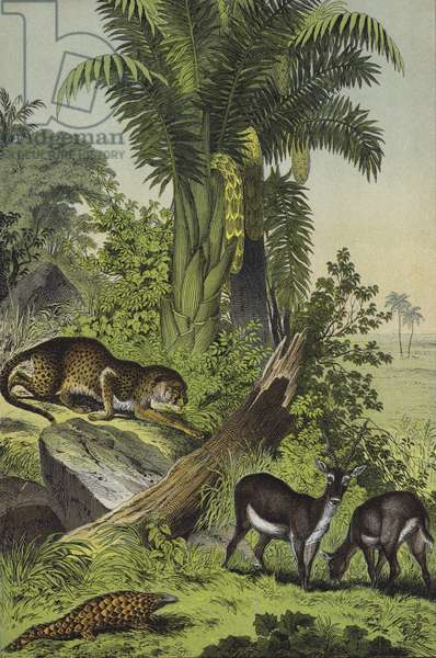 Animals and plants of India (colour litho)