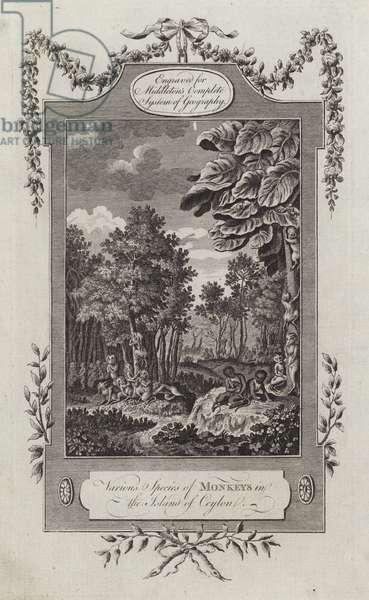 Various Species of Monkeys in the Island of Ceylon (engraving)