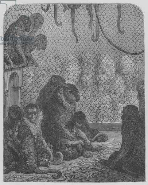 Jardin Zoologique, Les Singes (engraving)