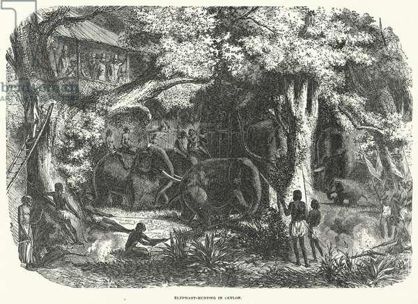 Elephant-Hunting in Ceylon (engraving)