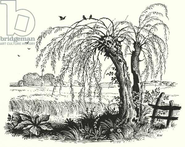 Hans Christian Andersen: The Buckwheat (litho)