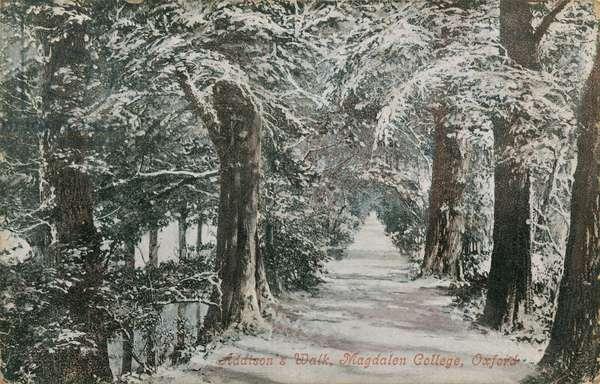 Addison's Walk, Magdalen College, Oxford. Postcard sent in 1913.