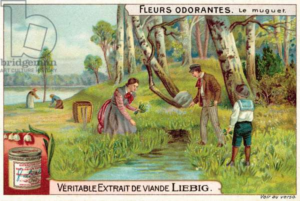 Lily of the valley (chromolitho)