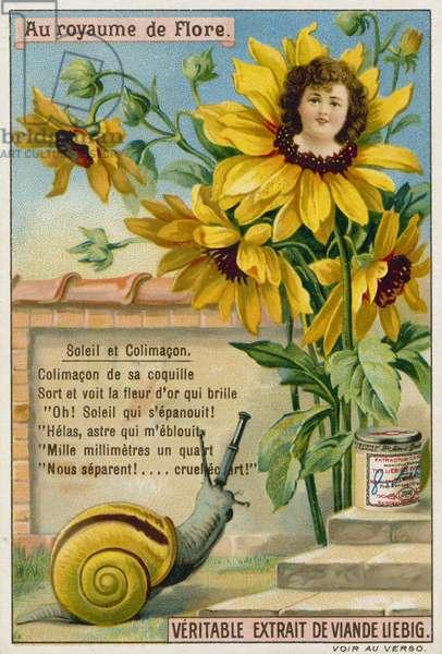 Sunflower and snail (chromolitho)