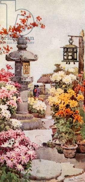 A Chrysanthemum Garden (colour litho)