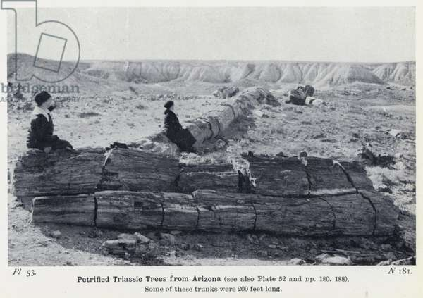 Petrified Triassic Trees from Arizona (b/w photo)