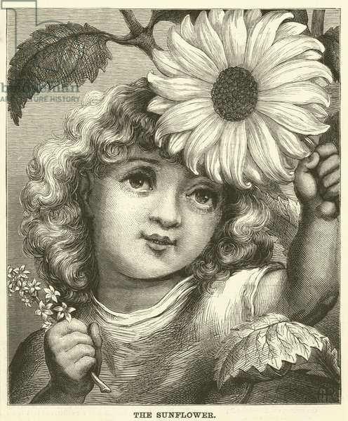 The Sunflower (engraving)