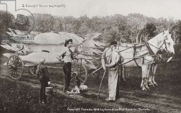 Canadian fisherman with a horse and cart loaded with unfeasibly large fish (b/w photo)