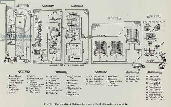 The Brewing of Guinness from start to finish shown diagrammatically (litho)