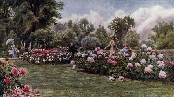 Kew Gardens: The Peonies (colour litho)