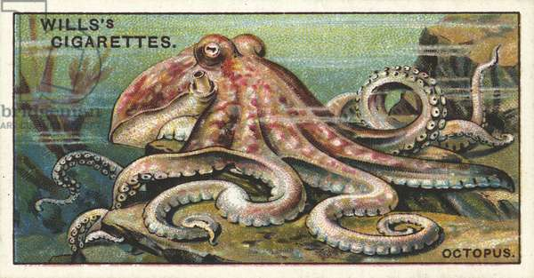 The Octopus, the repulsive Devil-fish of romance (chromolitho)
