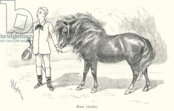 Boy with an Irish pony (engraving)