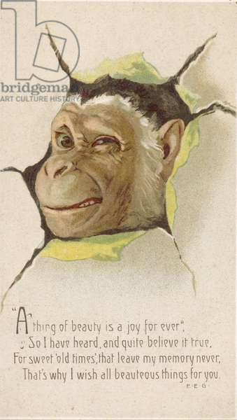 Monkey looking through a hole in a wall, greetings card (chromolitho)