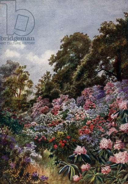 Kew Gardens: The Rhododendron Dell (colour litho)