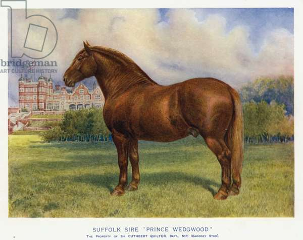 """Suffolk Sire """"Prince Wedgwood"""" (colour litho)"""