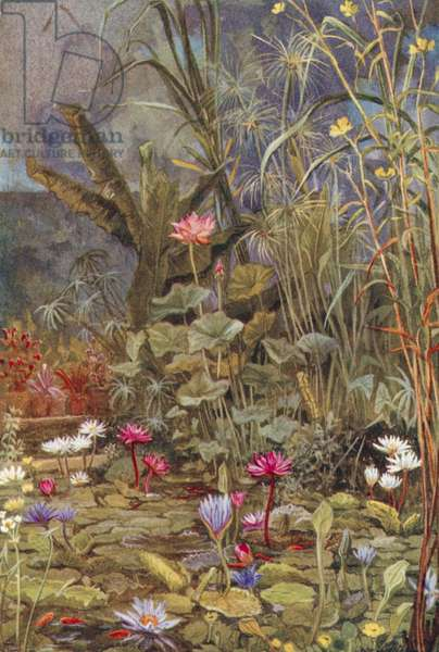 Oxford Gardens: Lotuses and other Water Plants, Botanic Garden (colour litho)