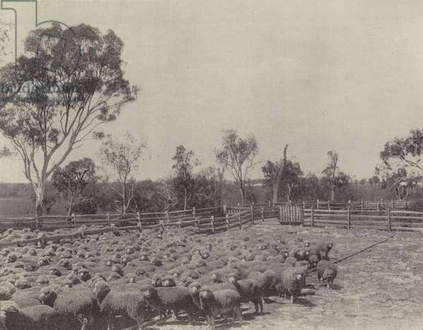 A Sheep Station in Southern Queensland (b/w photo)