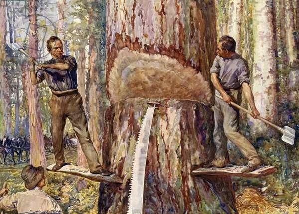 Lumbermen cutting timber (colour litho)