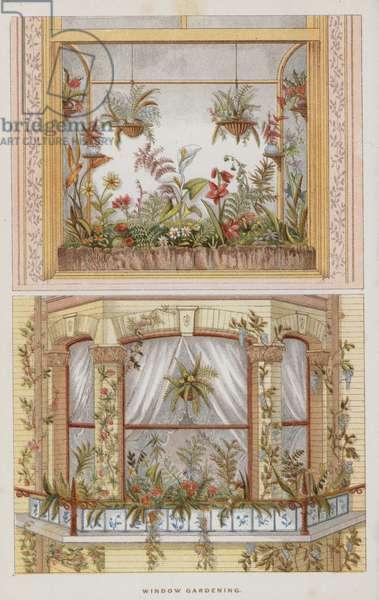 Window Gardening (colour litho)