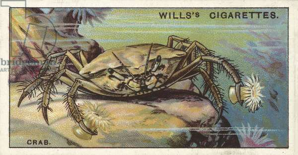 The Crab, Melia, which carries Sea-Anemones about in its claws (chromolitho)