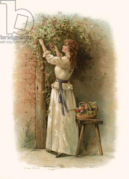 Tennyson's The Gardener's Daughter