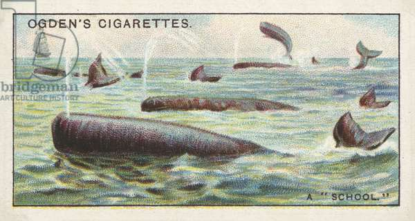 Whaling, A School of Whales (chromolitho)