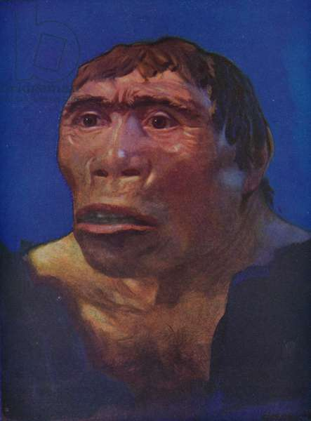 A reconstruction of the Java Man (colour litho)