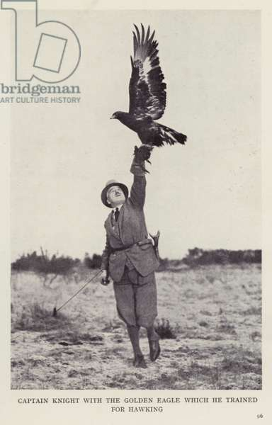 Captain Knight with the golden eagle which he trained for hawking (b/w photo)