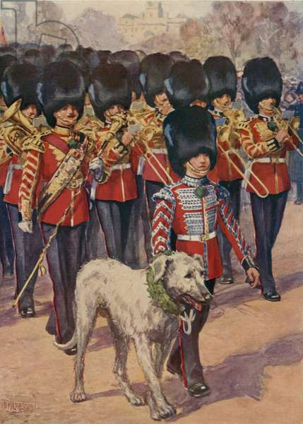 The Band and mascot of the Irish Guards wearing the shamrock on St Patrick's Day (colour litho)