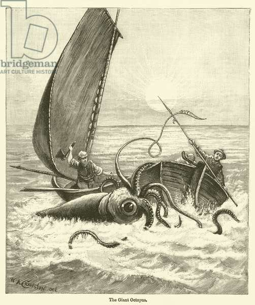 The Giant Octopus (engraving)