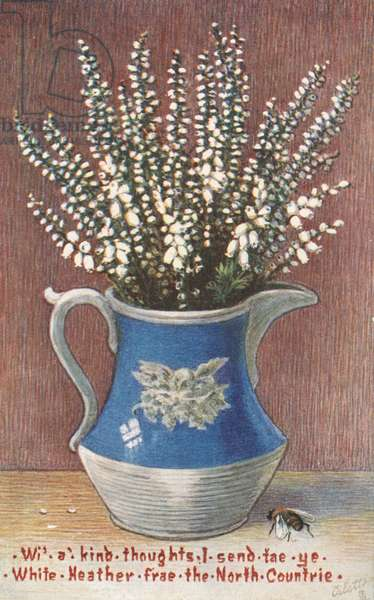 Vase of white heather, greetings card (colour litho)