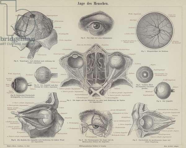 The human eye (engraving)