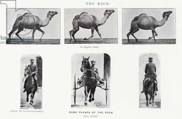 Eadweard Muybridge: The Rack (b/w photo)