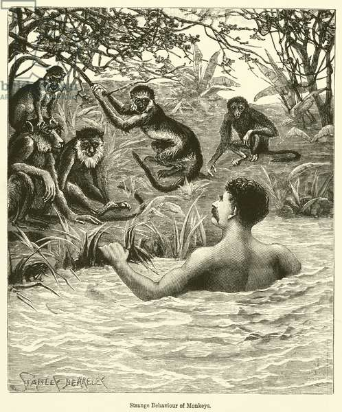 Strange Behaviour of Monkeys (engraving)