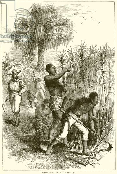 Slaves working on a plantation (engraving)