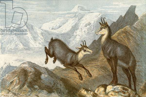 The Chamois - 'The Chamois hunter's hunting ground'
