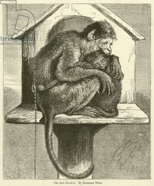 The Sick Monkey (engraving)