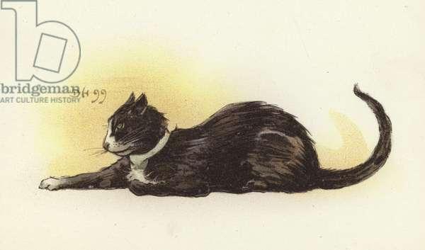 Savoy Cat (colour litho)