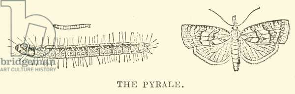 The Pyrale (engraving)
