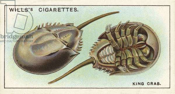 The King Crab, a strange link with the remote past (chromolitho)