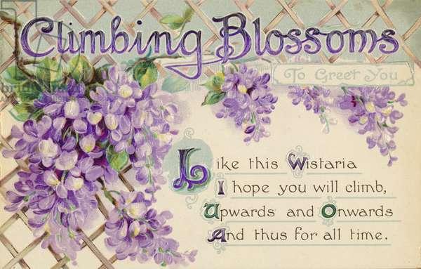 Climbing blossoms to greet you (colour litho)