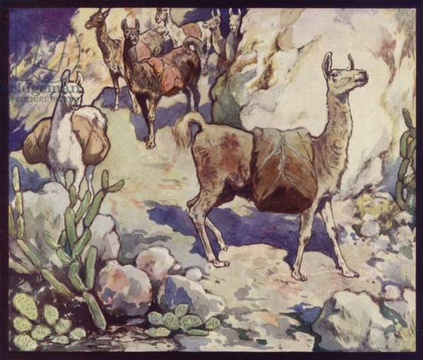 Llamas in the Andes (colour litho)