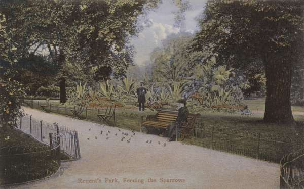 Regent's Park, Feeding the Sparrows (coloured photo)