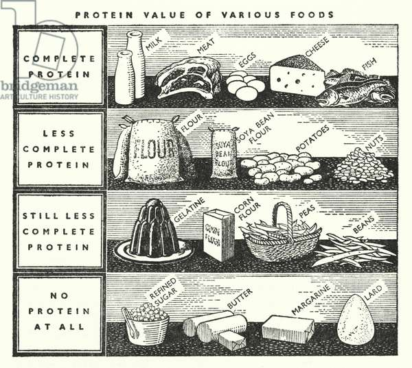 Protein value of various foods (b/w photo)