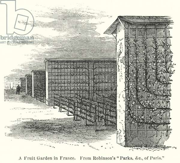 A Fruit Garden in France (engraving)