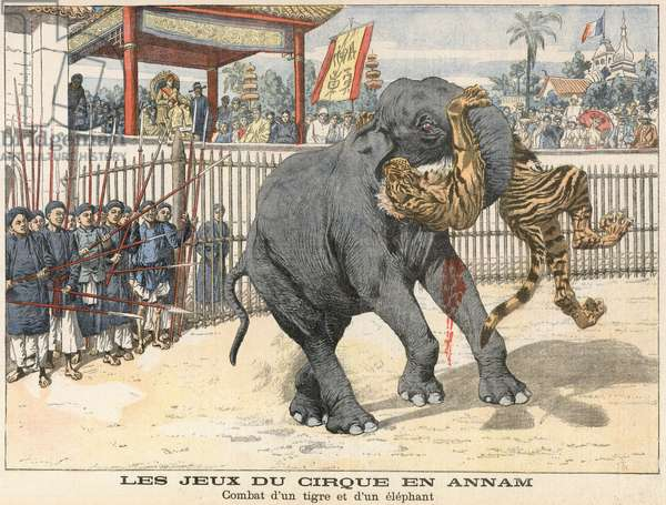 Combat between a tiger and an elephant