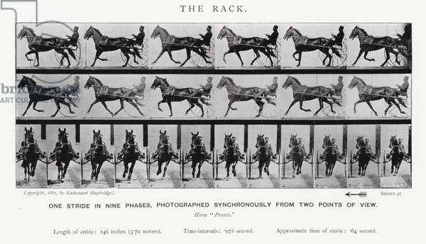 Eadweard Muybridge: The Rack (b/w photo)